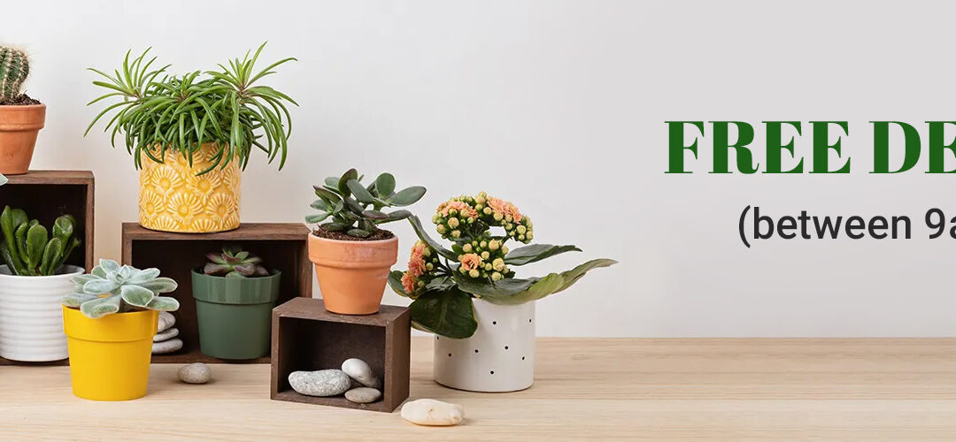 FERNS N PETALS FORGES AHEAD IN SINGAPORE WITH FREE DELIVERY FOR ALL GIFTING NEEDS